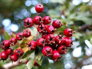 Wilde Heilpflanzen  Nahrungsergänzung aus heimischen Wildpflanzen - nicht mehr buchbar!