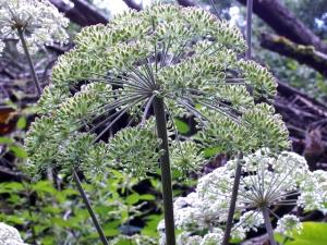 Von Kräuterbuschen und Kräuterräucherungen