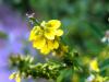 Wilde Heilpflanzen - Schnitterfest